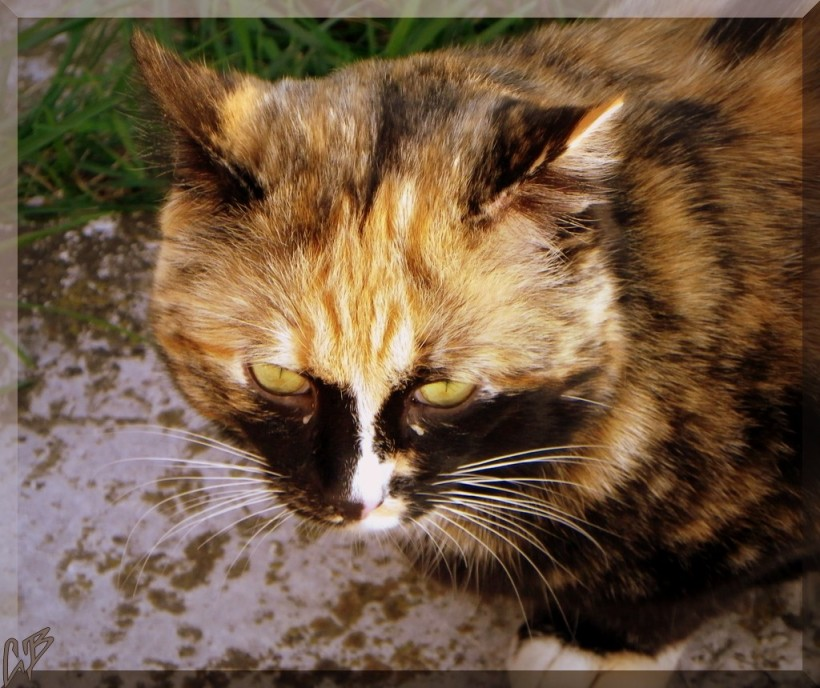 Mars 19, 2014 chat inconnu recadré 3 BLOG 5